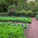 The Easy And Effective Solution To Prepare Your Vegetable Garden